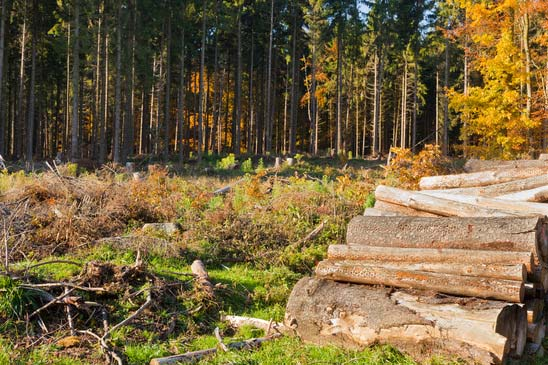 clearcut-timber-and-logpile-xs