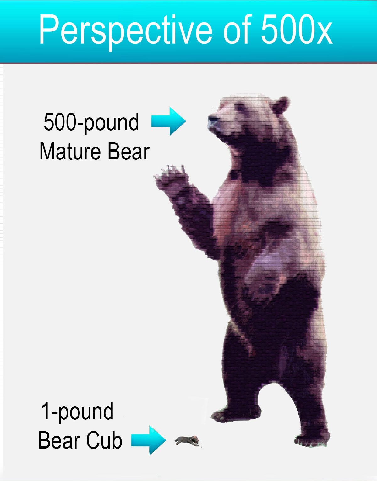 Perspective of your weight at 500 times